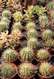 Varietà di succulenti e di catcus Fotografie Stock Libere da Diritti