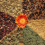Varietà di tè della frutta e di erbe Immagine Stock