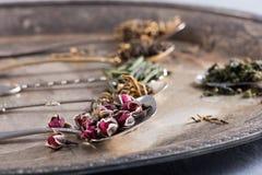 Varietà di verde e di tisane in cucchiai, fuoco selettivo Fotografia Stock