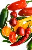 Varietà differente di peperoncini o di peperoncini rossi, isolata su bianco Immagine Stock Libera da Diritti