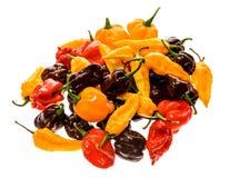 Varietà differente di peperoncini o di peperoncini rossi, isolata su bianco Immagini Stock Libere da Diritti