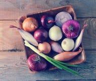 Varietà differenti della cipolla in un piatto di legno Fotografia Stock Libera da Diritti