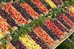 Varietà differenti di frutta della ciliegia Immagine Stock Libera da Diritti