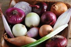 Varietà differenti in un piatto di legno - una selezione della cipolla del oni Immagine Stock Libera da Diritti