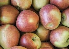 """Varietà fresca """"di Braeburn """"delle mele sviluppata nel paese Tirolo del sud, Italia del Nord della mela immagine stock libera da diritti"""