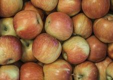 """Varietà fresca """"di Fuji """"delle mele sviluppata nel paese Tirolo del sud, Italia del Nord della mela fotografie stock libere da diritti"""