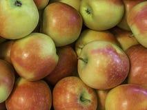 """Varietà fresca """"di Kanzi """"delle mele sviluppata nel paese Tirolo del sud, Italia del Nord della mela fotografia stock libera da diritti"""
