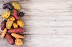 Varietà organiche fresche delle patate Fotografia Stock