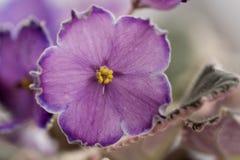 Varietal violett kvalitetsaftoneskort Fotografering för Bildbyråer