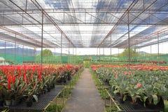 Varieties of bromeliad plants in greenhouse nursery stock photography