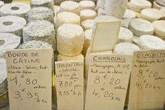 Varieties of different cheeses Royalty Free Stock Photos
