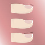 Varieties of different forms and types of nail plate. Manicure and nail extensions. Vector Stock Photo