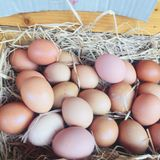 Assorted Eggs in Stalls available for sales at festival, cooking, restaurant. Varieties of hard skin Eggs in pink preserved boiled egg, salt preserved duck royalty free stock photography