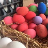 Assorted Eggs in Stalls available for sales at festival, cooking, restaurant. Varieties of hard skin Eggs in pink preserved boiled egg, salt preserved duck royalty free stock photo