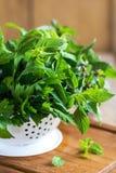 Varieties of Herbs in colander Stock Photos