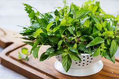 Varieties of Herbs in colander Royalty Free Stock Photos