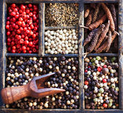 Varieties of peppercorns Stock Image
