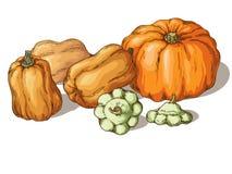 Varieties of pumpkin Royalty Free Stock Images