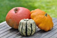 Varieties of pumpkins Royalty Free Stock Photography