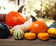 Varieties of pumpkins and squashes Stock Photography