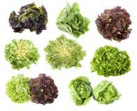 Varieties of salads Stock Image