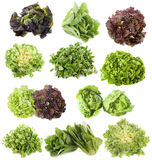 Varieties of salads stock photos