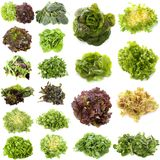 Varieties of salads stock image
