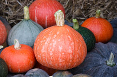 Varieties of squash Stock Photo