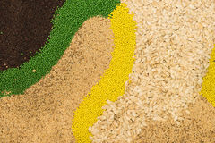 Variety of agricultural crop seed as background Royalty Free Stock Photography