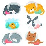 Variety animal splinting pack  illustration Royalty Free Stock Photo