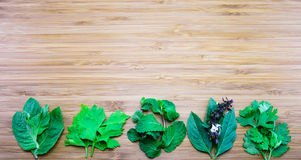 Variety of aroma leaves of Thai traditional herbs on wooden back Royalty Free Stock Image