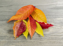 Variety of Autumn Leafs Royalty Free Stock Photography