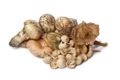 Variety of autumn mushrooms stock photos