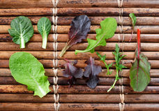Variety of Baby Lettuce and Greens Stock Images
