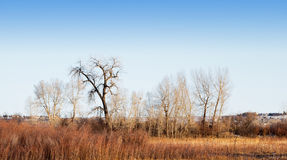 Variety of Bare Winter Tree Types Royalty Free Stock Images