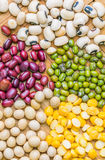 Variety of Beans and Lentils IV Stock Images