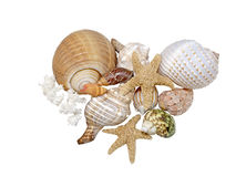 Variety of beautiful Sea Shells on a white background Stock Photos