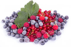 Variety of berries Royalty Free Stock Photo