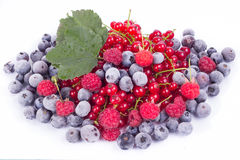Variety of berries with leaf Royalty Free Stock Photo