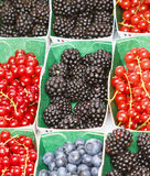 Variety of berries. In small individual boxes at french farmer's market Stock Photo