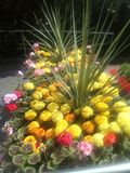 Variety of bright flowers. Variety bright flowers glasgow botanics royalty free stock photos
