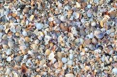 Variety of broken seashells Stock Images