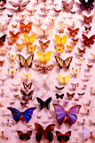 Variety of butterflies. With many colors and sizes on a white background royalty free stock image