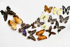 Variety of Butterflies Royalty Free Stock Image