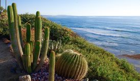 Cacti growing above panoramic view of Pacific Ocean. A variety of cacti flourish alongside the Pacific coastline, a meeting of seemingly disparate ecosystems Royalty Free Stock Images