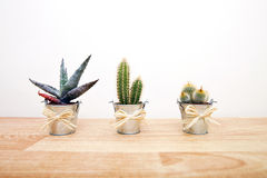 A variety of Cacti in pots Royalty Free Stock Photo