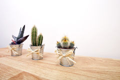 A variety of Cacti in pots Stock Photo