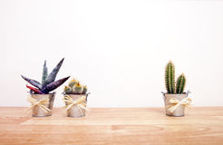 A variety of Cacti in pots Stock Images