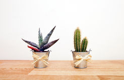 A variety of Cacti in pots Royalty Free Stock Photos
