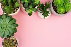 Variety of cacti and succulent plants, top view corner border over pink. Variety of cacti and succulent plants. Top view. Corner border against a pink background stock photography